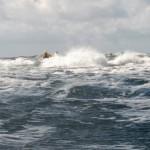 Surf Hermanö huvud Stockenträffen