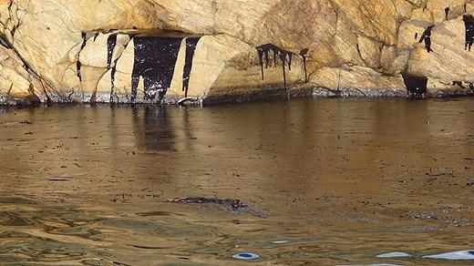 Bohusläns skärgård: Värsta oljeutsläppet på decennier