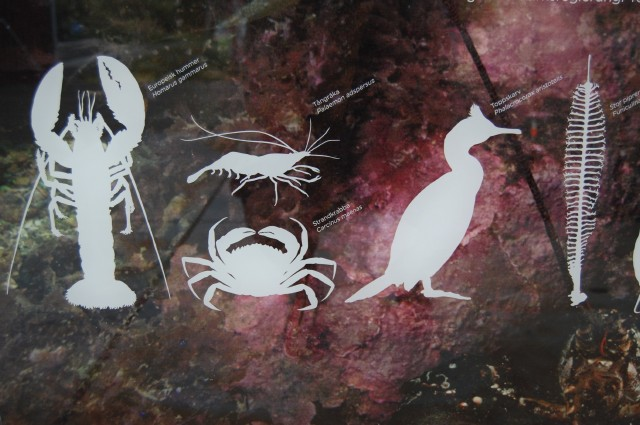Kosterhavets djur