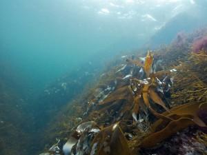 Kosterhavets nationalpark under ytan