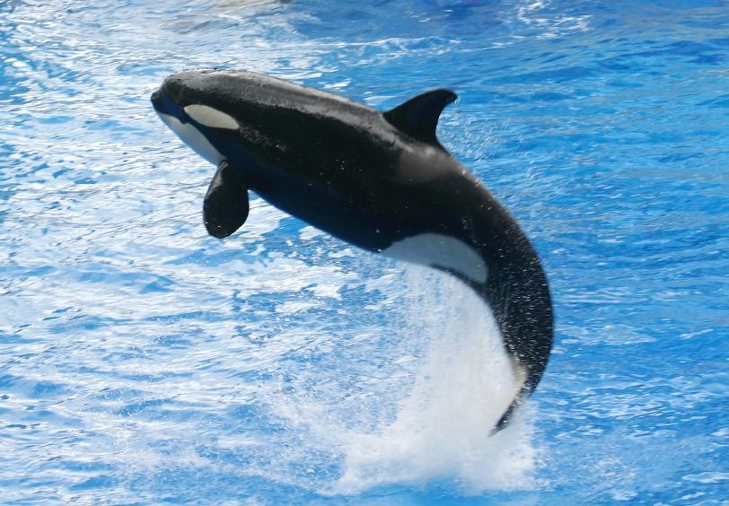 delfiner sverige
