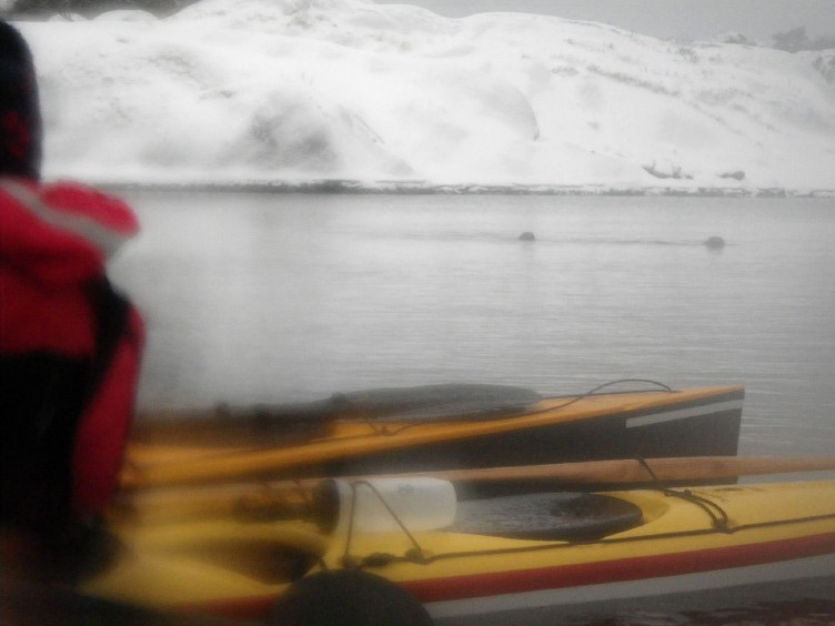 Vinterpaddling vid Malö
