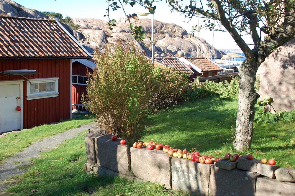 Lilla Kornö samhället äpplen