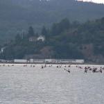 orust runt 2012 Ljungskileviken paddling