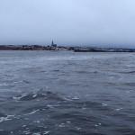 Säl Gullmarsfjorden med Lysekil i horisonten.